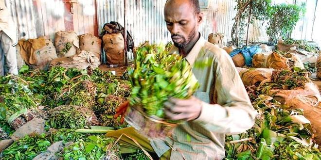 Leaders call off protest on Somalia miraa ban