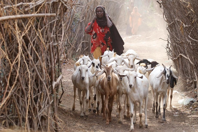 An overview of somaliland and the importance of livestock production to the state