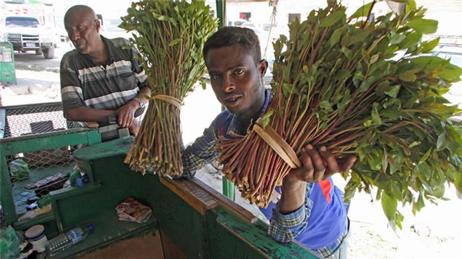 the impact of chewing khat and Socio-economic effects of khat chewing in north eastern kenya to describe the socio-economic effects of khat chewing determinants and impacts of khat chewing.