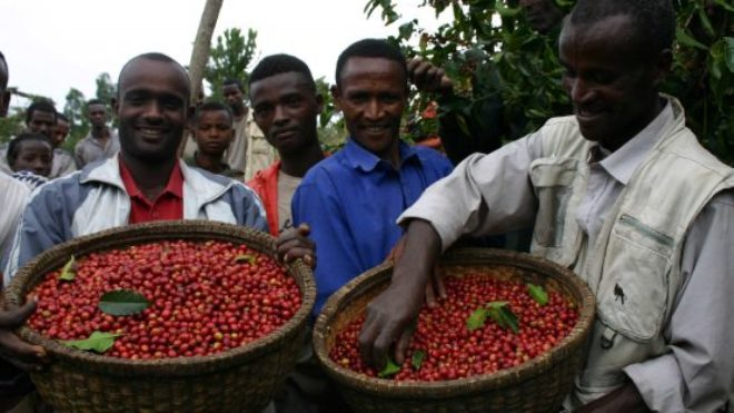 Ethiopia Earns Record $900M Revenue from Coffee Exports