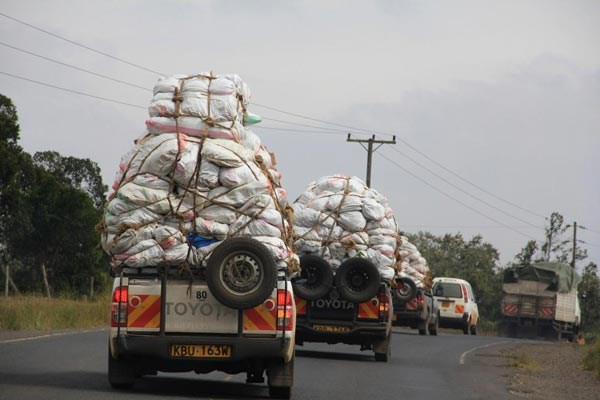 Vehicles transporting miraa from Meru to Nairobi. Five cargo planes destined for Mogadishu, Somalia, are stuck in Nairobi with miraa worth Sh60 million following the cancellation of flights to Somalia. FILE PHOTO | NATION MEDIA GROUP